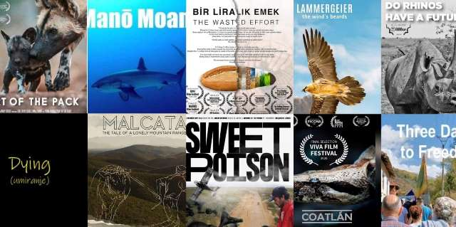 SCREENINGS OF ECOLOGICAL FILMS 2nd DAY IN THE PROGRAM OF THE 6TH VIVA FILM FESTIVAL